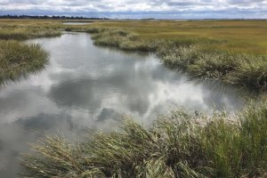 A salt marsh channel landscape with a cloudy sky.