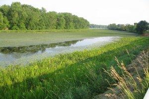 Wetland and aquatic vegetation characteristic of the freshwater Hudson River