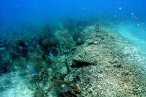 Living and damaged coral, showing impact of the ship grounding.