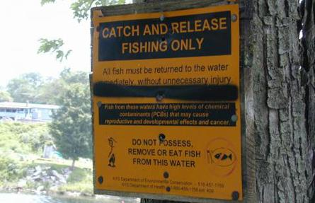 A sign posted near a river in New York warns fishers that the fish there could potentially be tainted with harmful polychlorinated biphenyls (PCBs).